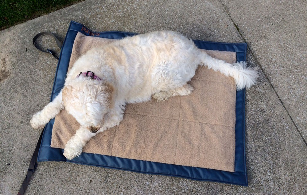 Fish Pond Westwater Dog Bed