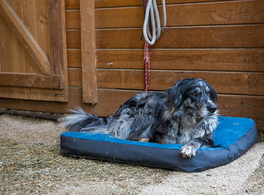 Ruffwear Urban Sprawl Dog Bed