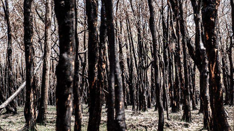 The IRONMAN Foundation Launches Australian Bushfires Humanitarian Relief Campaign